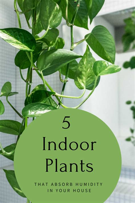 indoor plants  absorb humidity   house