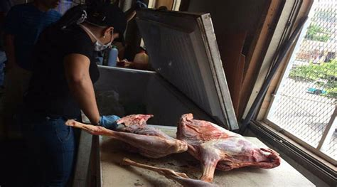imagenes forenses fuertes ministerio p 250 blico encuentra supuesta carne de perro en