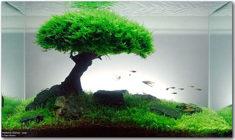 diy aquatic tree for 14 litre tank