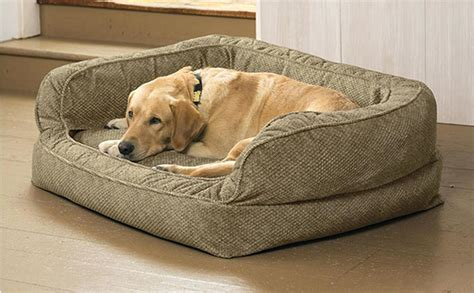dog pees on bed chihuahua dog beds uk orig dogs peeing on the bed dog beds