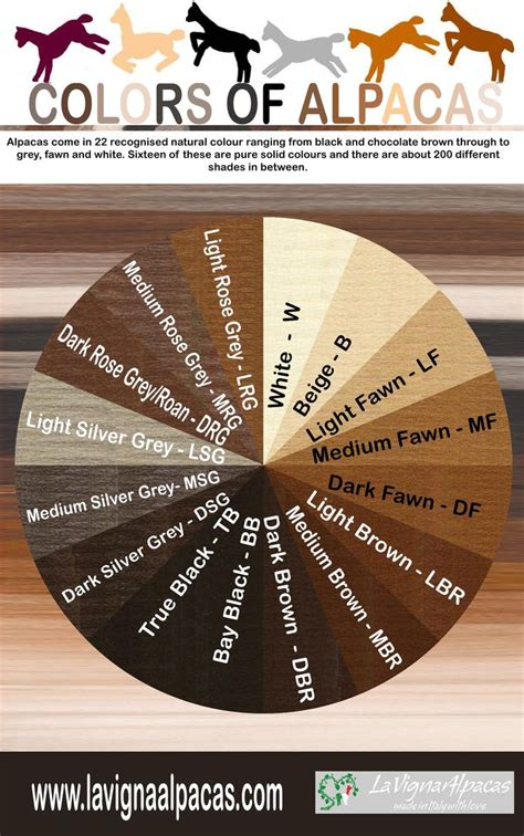 alpaca colour chart repinned by elizabeth vanbuskirk author of the new book quot beyond the stones