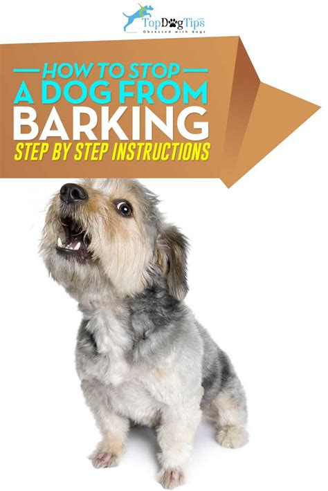 how to get dog to stop barking how to stop a dog from barking a video guide top dog tips