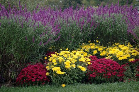 winterharte bepflanzung chrysanthemen 187 diesen standort haben sie am liebsten