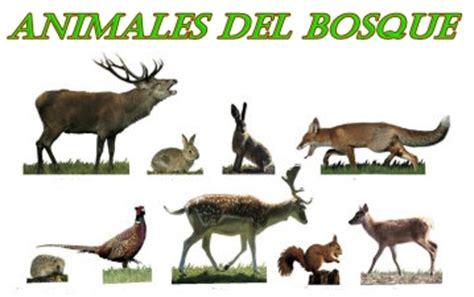imagenes animales que viven en el bosque im 225 genes de animales del bosque im 225 genes