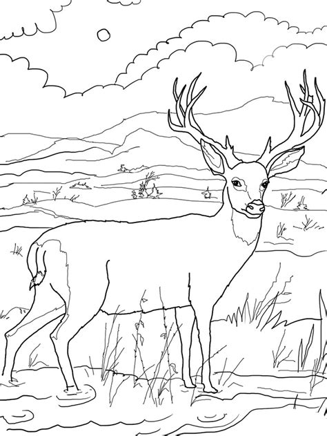 Mule Deer Coloring Pages sketch template