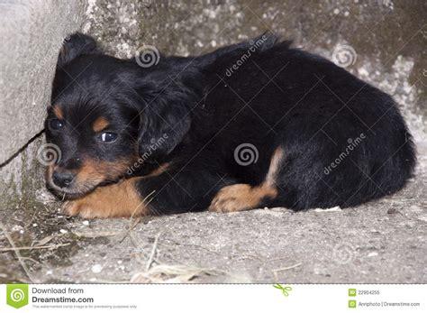 abandoned puppy abandoned puppy royalty free stock photo image 22904255