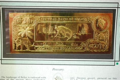 gold bank central bank of belize 20 foreign bank note quot peccary