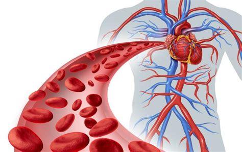 cuore e vasi vasi sanguigni cuore e circolazione salute e benessere