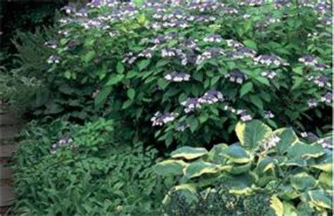 shade gardens zone 4 best flowers for shade gardens shade flowers foliage