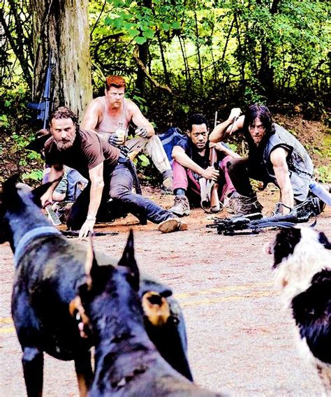 Looks For Your Pet Isnt Walking Season by 433 Best The Walking Dead S 233 Rie Images On