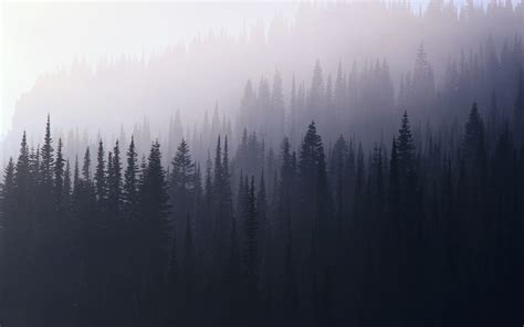 foggy forest wallpaper wallpapersafari