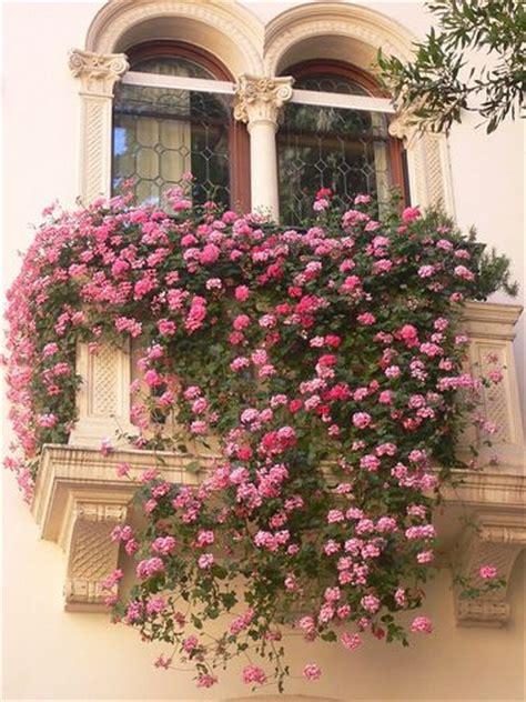 balcony flowers best 25 balcony flowers ideas on pinterest