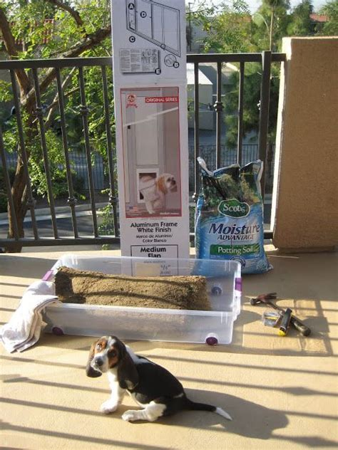 patio grass for dogs apartment living how to make a grass patch on your