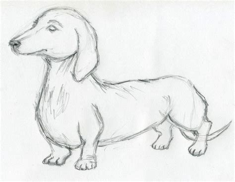 puppy sketch sketches for inspiration