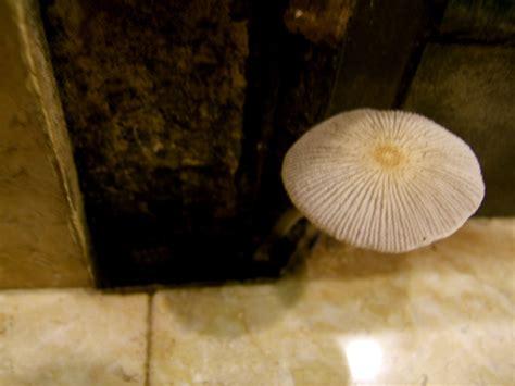 bathroom mushroom mushroom in my bathroom again 171 pink berry shortcake