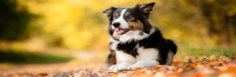 puppy transport service pet transportation pet travel scheme pet taxi turkey
