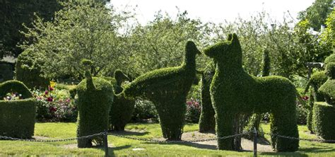 creature comforts ri a look inside portsmouth s green animals topiary garden