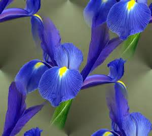 iris flower colors flower homes iris flowers