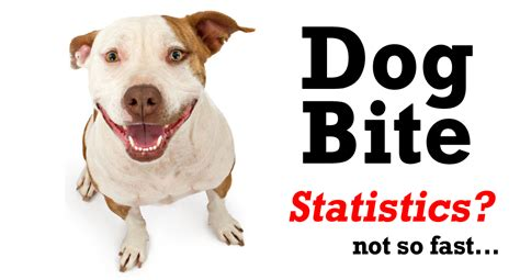how to small dogs not to bite bite breed statistics breed dogs spinningpetsyarn