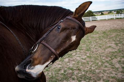 Horse Tack Giveaway 2017 - easy photography tips for horse lovers budget equestrian