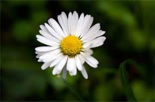 foto le le fotografie immagini wallpaper di fiori pi 249