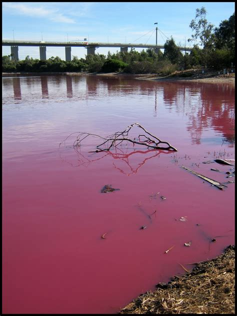 pink lake melbourne pink lake in melbourne by greenzaku on deviantart