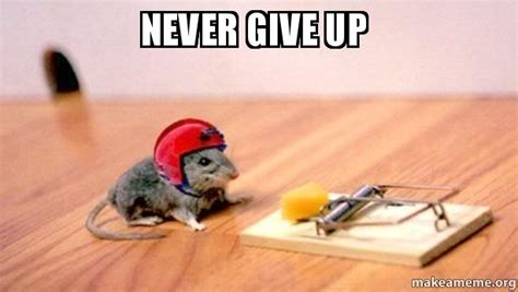 Never Give Up Meme - never give up make a meme