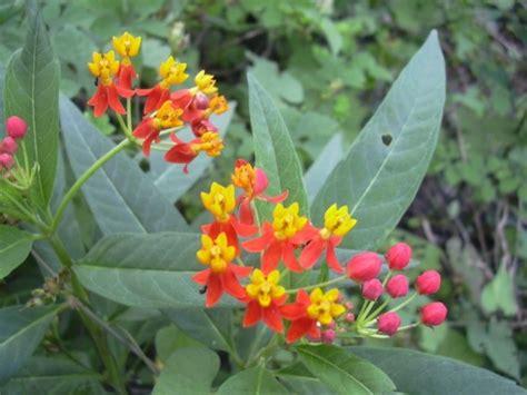 piante e arbusti da giardino piante da giardino parliamo di arbusti