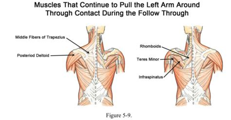 what muscles do you use to swing a bat workouts for the back and spine muscles