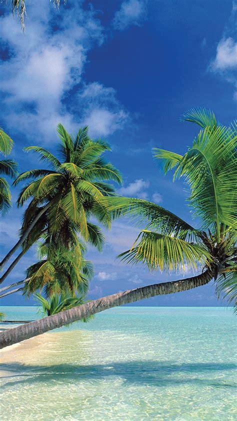 tropical paradise wallpaper  iphone  pro max