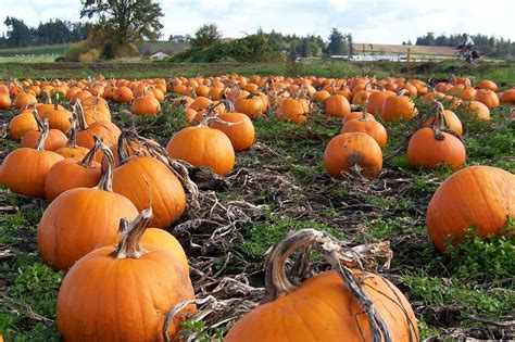 Painted Pumpkins by Independence And The First American Ales Mendocino Brewing