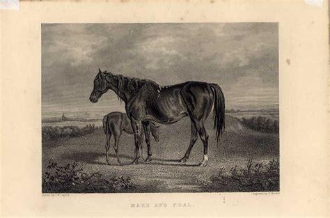 Reiten Ebay Pferde Stute Fohlen Mare Foal Pferd
