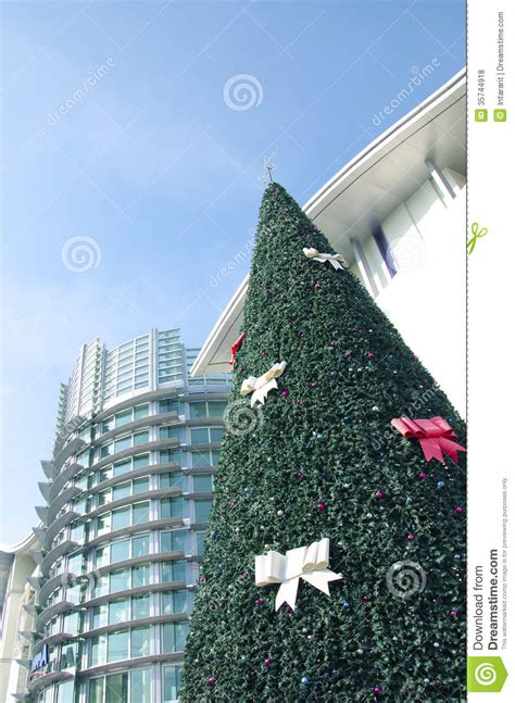 christmas tree in front of building royalty free stock