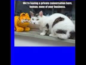 cat memes clean  kids  king tumblr