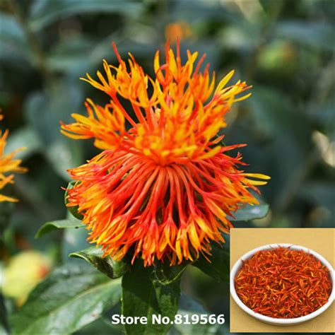 Shelf Of Safflower by Compare Prices On Organic Safflower Shopping Buy