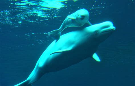 vancouver aquarium 50 new year photos recent losses at the vancouver aquarium