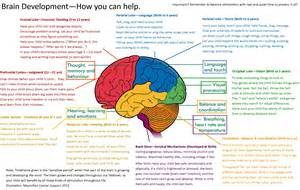 human brain mapping brain map more days parenting