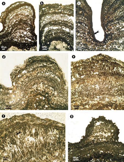 petrographic thin sections microbialite petrographic thin sections a b stromatolite