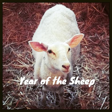 year of the sheep lunar new year year of the sheep 28 images lunar new