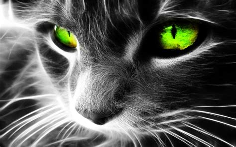 wallpaper of green eyes 1280x800 green eyes cat desktop pc and mac wallpaper