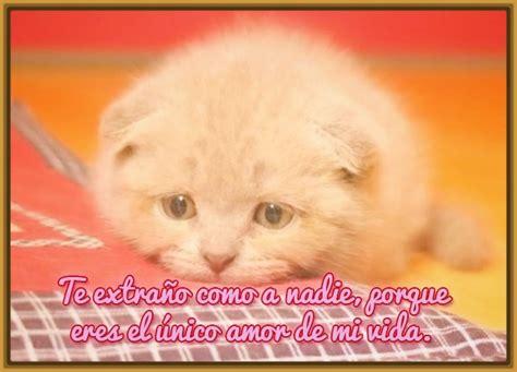 imagenes tristes videos imagenes de gatitos tristes con frases de amor archivos