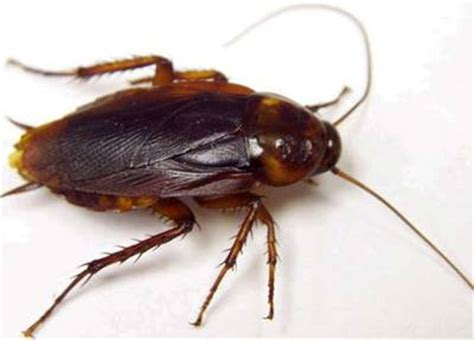 how many legs does a bed bug have insects legs quiz questions