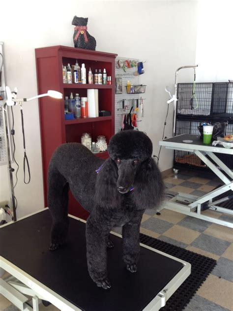 grooming boise we can make your pet beautiful just like sully yelp