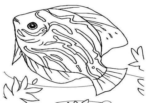 marine fish coloring pages pinterest the world s catalog of ideas