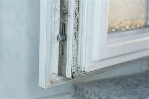 Mould Growing On Windows Designs What To Do About Mold Growing On Windows Modernize