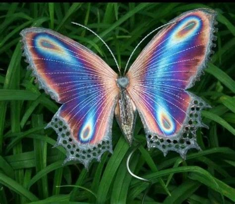 imagenes de mariposas graciosas butterflies on pinterest