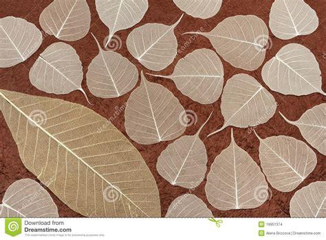 Handmade Leaf Paper - skeletal leaves brown handmade paper stock images