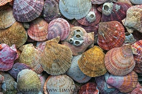 seashell color seashell colors awesome pinterest