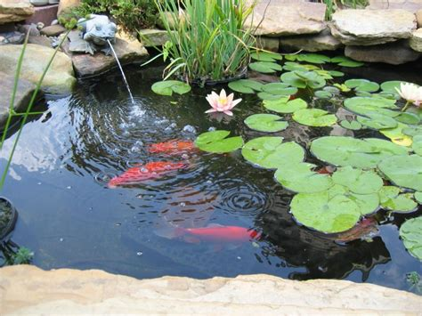 fish for backyard pond pretty and small backyard fish pond ideas at decor