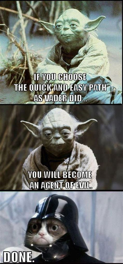 Mere Cat Meme - grumpycat memes cats pinterest sjov